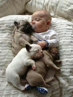 nap time, pug puppies, french bulldogs, bulldog puppies, baby blankets, baby dogs, snuggl, sleep, friend