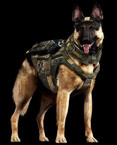 Dog of War: Meet 'Call of Duty's' new barkout star