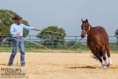 clinton anderson, downund horsemanship, hors train, training tips, person space