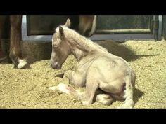 All-New Foal Training Series from Clinton Anderson