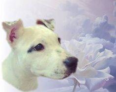 "Thanks Nita...   She - PUPPY DOE/ Kiya suffered unspeakable cruelty. Facebook friends please.. Help Find the Torturers of Puppy Doe https://www.facebook.com/JusticeForPuppyDoe One of God's delicate flowers.....RIP Sweet ""Kiya"" Puppy Doe....."