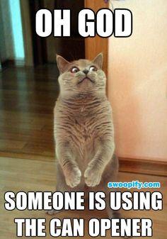 Oh God! #humor #lol #funny