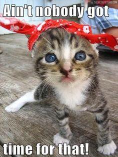 Sweet Brown kitty… #Animal #Humor