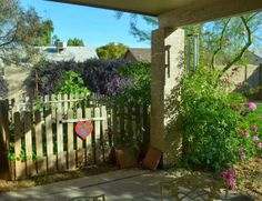 A Peek Into My Back Garden - a view of my first vegetable garden, surrounded by pink trumpet vine and purple lilac vines.