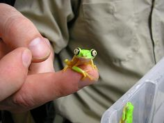 Who can resist a tiny frog? Not me.