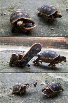 skateboarding turtles