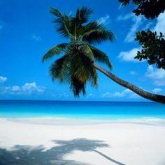 Florida palm, sand, tropical beaches, florida keys, key west, place, siesta key, sarasota florida, florida beaches