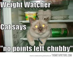 Weight watcher cat…really?
