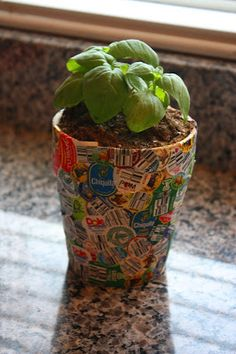 Fruit and Veggie Sticker Pot