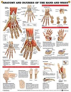 Injuries of Hand and Wrist