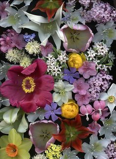 Flowers by Horticultural Art