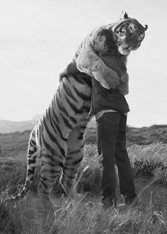 """""""From my understanding, the man had raised the cat until it became too big. He gave it to a refuge where it had become the Alpha. He returned years later to see the cat. When the cat caught his scent he charged, scaring the group, and ended up in this embrace."""""""