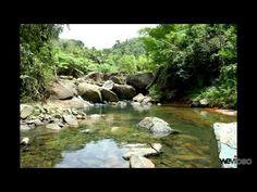 Animal Habitats Remix 8 minutes YouTube
