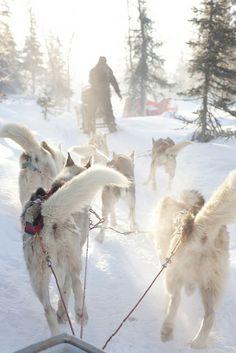 Dog-sled safari in Olos, Finland...
