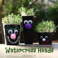 Cute and fun way to make little face pots and grow your own watercress hair.