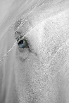 Blue eyes - horse