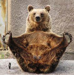 Bear practicing yoga.