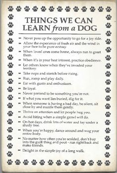 things we can learn from a dog
