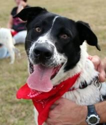 Rex is an adoptable Spaniel Dog in Jackson, MS. Please stop by the City of Jackson Animal Shelter at 140 Outer Circle, Jackson, MS to meet Rex. For more information, please contact Lyn ((a volunteer w...