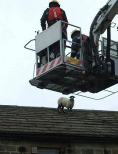 Animals Stuck in Unexpected Places