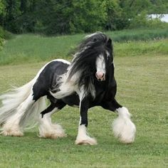 What a GORGEOUS HORSE!!!!!!