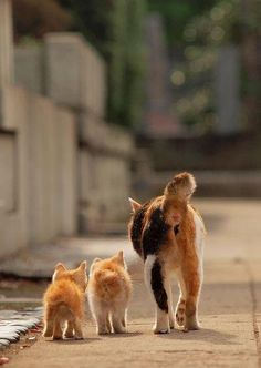 Mom n kittens
