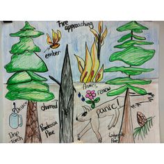 "Pictorial Input Chart to help student understand Tier 2 words in ""Wildfires"" by Seymour Simon"
