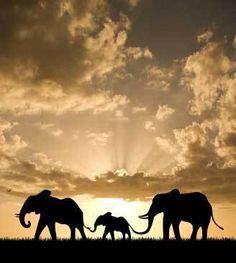 Elephant Family at Sunset