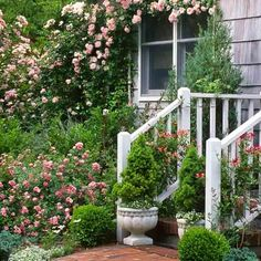 Easy-care, low-growing, and long-blooming, 'The Fairy' rose has tiny pink blossoms from spring to fall, resists disease, and makes a fanciful groundcover. Up to 3 feet tall and wide. Needs full sun; average, well-drained soil. Zones: 5 to 9. | Photo: Susan Roth | thisoldhouse.com