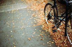 autumn leaves | Hanna Skoog