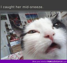 Cat mid-sneeze photo I can't stop laughing!!!