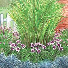 Corner Grass Garden for each side of driveway entrance. Zebra grass, Rose Fountain Grass, Daring Dilemma Daylilies, and Blue Festuca Grass.