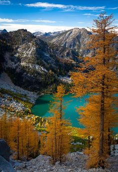 Asgaard larches, Colchuk Lake, Washington state trails