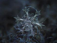 Stunning Macro Snowflake Photos | DeMilked