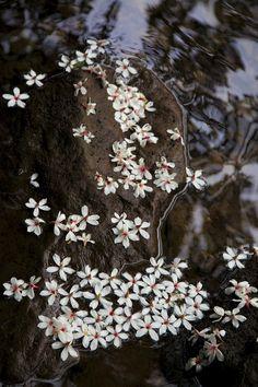 Stream side Flowers