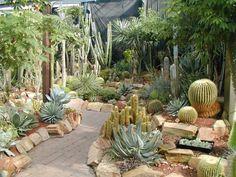 Cactus bed 12.jpg 700×525 pixels