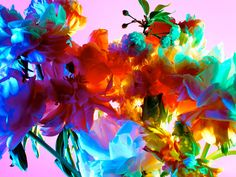 'Hothouse Color' series by NY based fashion photographer Torkil Gudnason.