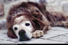 Precious senior darl doggi, old dogs, thing dog, senior dog