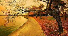 Autumn strolls <3