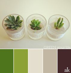 a succulent-inspired color palette // green, ivory, sand, brown
