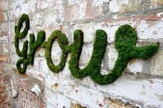 Follow this recipe to make your own moss graffiti:        Crumble three handfuls of moss into a blender.      Add two cups of lukewarm water or beer (any kind).      Add two cups of buttermilk or plain yogurt.      Pulse the blender until the mixture combines into a gel.      Pour the finished product into a bucket and strap on your shoes.      Use a paintbrush to apply the moss gel to your chosen surface. Mist the moss every week and watch your words or designs grow into a masterpiece.