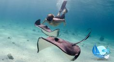 The Highlight of your Trip to the Cayman Islands! #stingraycity
