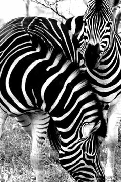 Naturally black and white