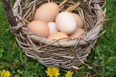 easter idea, basket grass, nontox egg, egg die, easter basket