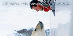 Polar bear expedition