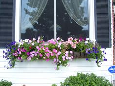 Window Box Contest Entry Summer flowers