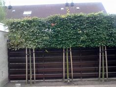 Pleached hedge - how to screen out someone else's house