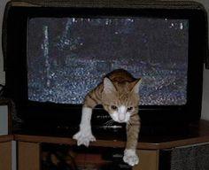 貞子猫 Sadako Cat