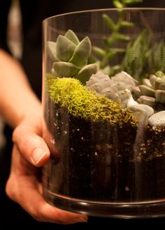 terrariums to make ~ great tutorial on how to set up your terrarium and which plants to choose.