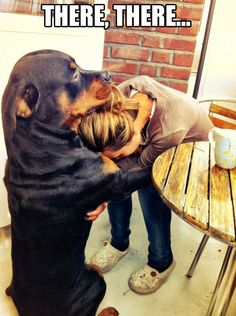 rottweilers, puppies, diamonds, bears, pet, feelings, big dogs, animal, furry friends